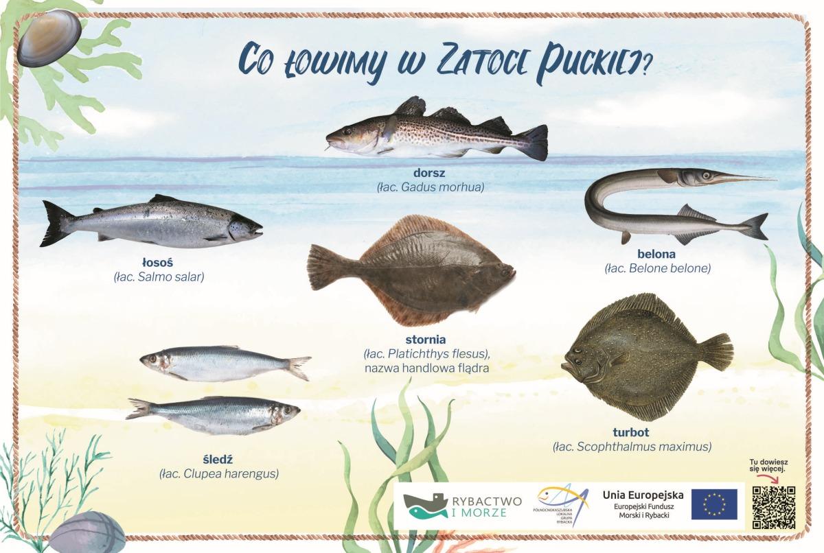 tablica - Ryby - jakie łowimy wzatoce